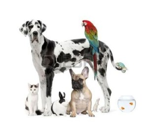 5911931-group-of-pets-standing-in-front-of-white-background-studio-shot